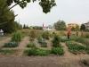 L'orto sociale al Parco Langer