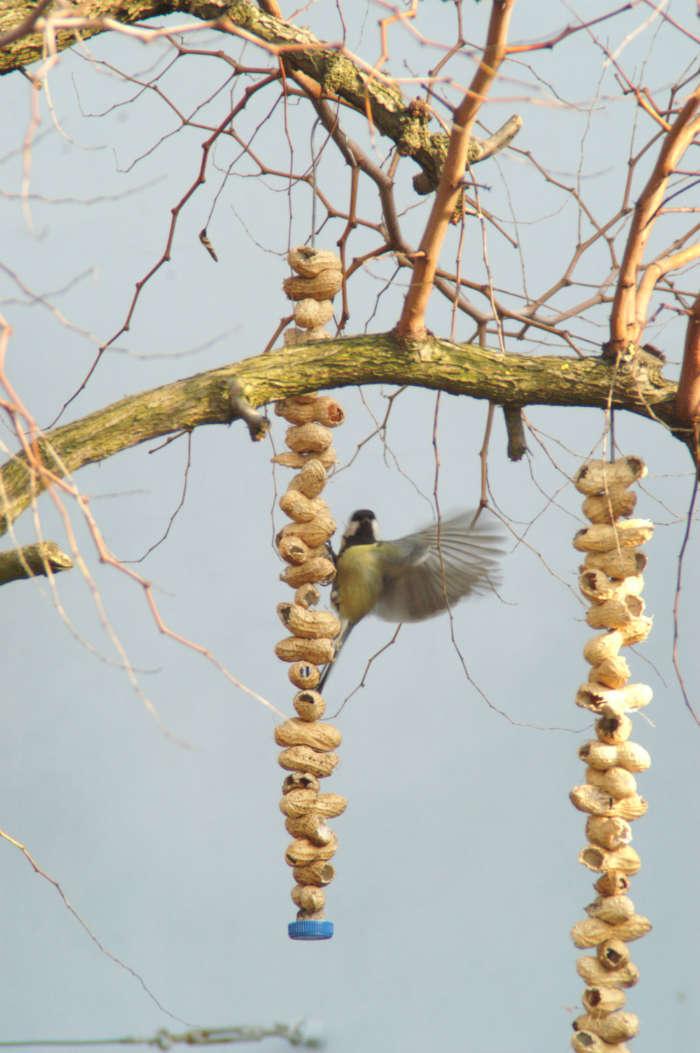 Popolare Le mangiatoie per uccelli | WWF Rovigo GL49